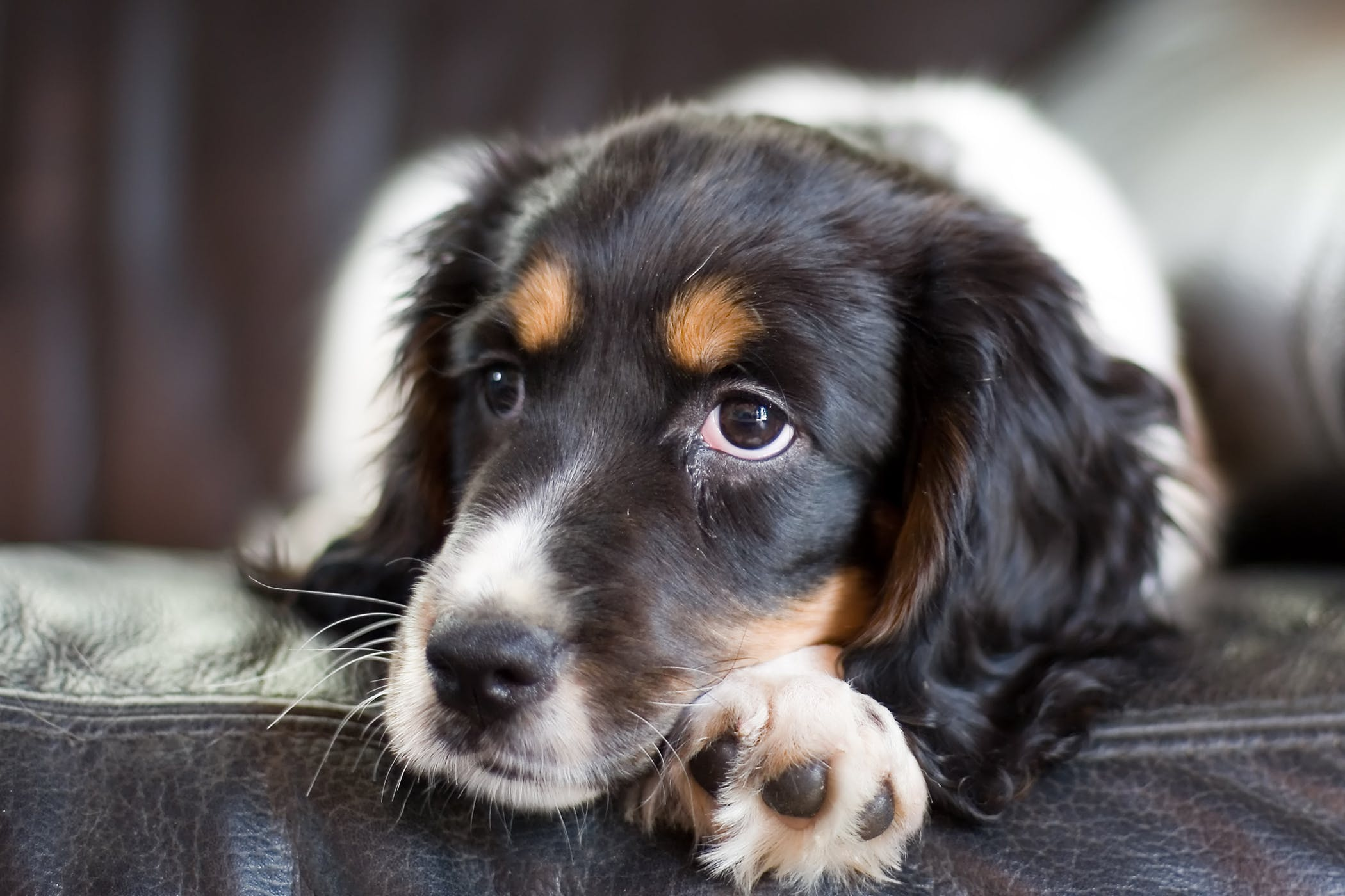 dog dry heaving - things you should know