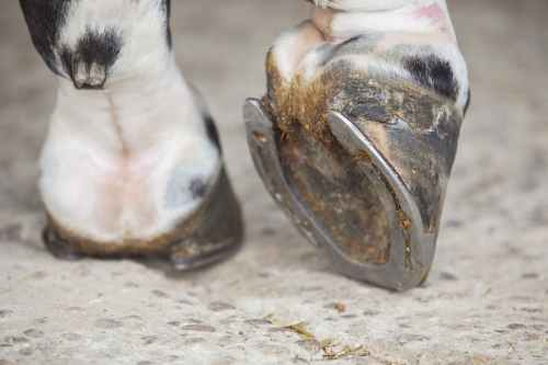 small resolution of hoof problems in horses