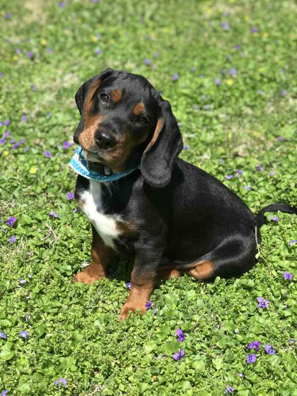 Dog Names Start With Popular Male And Female Wag
