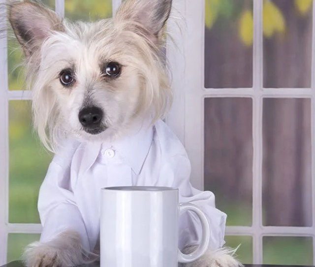 Training A Dog To Smell Drugs Through Coffee