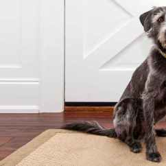 How To Stop Your Dog From Jumping Up On The Sofa Herman Miller Review Train Not Jump At Door