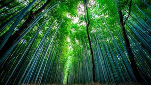 bamboo full hd hdtv