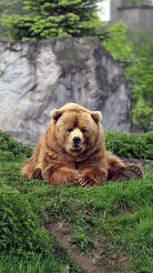 bear iphone 8 7