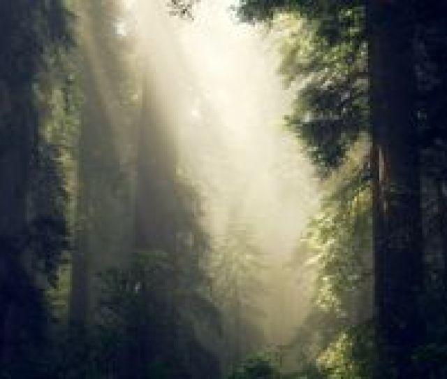 Preview Wallpaper Forest Fog Sunlight Trees