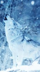 Wolf iphone 8/7/6s/6 for parallax wallpapers hd desktop backgrounds 938x1668 images and pictures