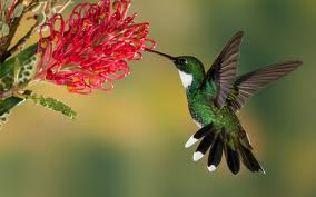 4 Untouched facts about Humming Bird