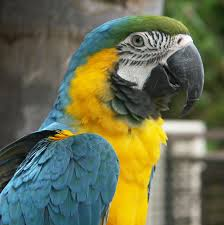 5 Amazing Facts about Talking Parrots