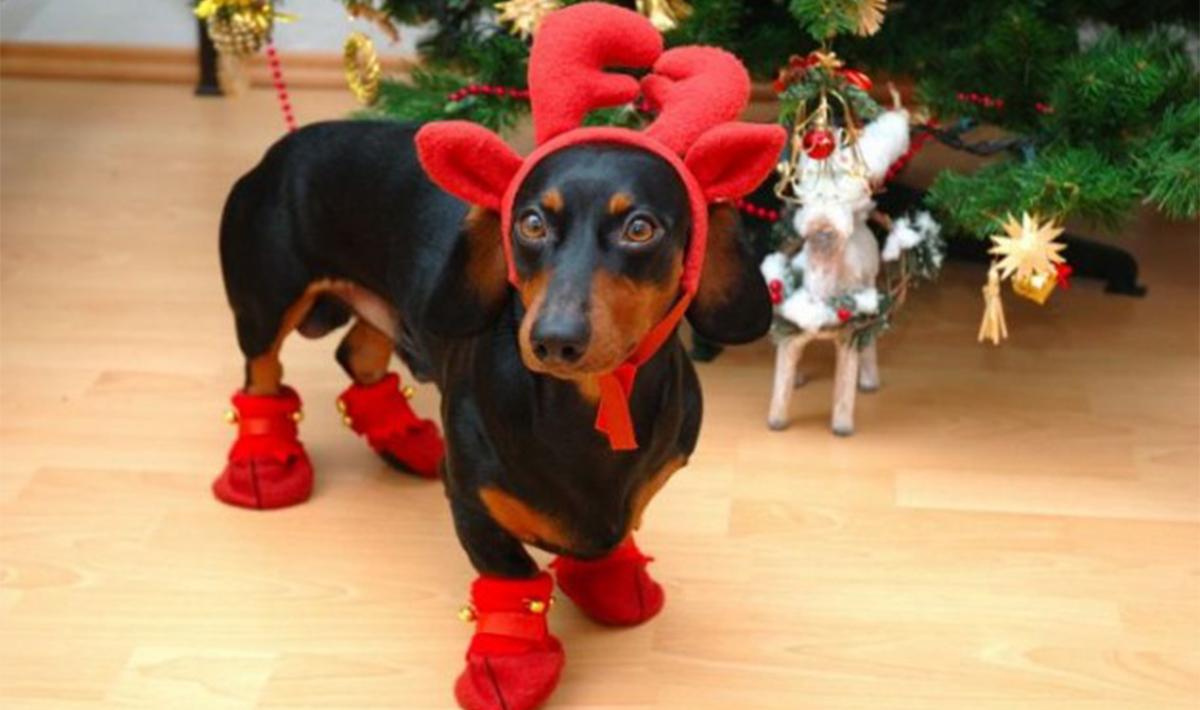10 Poveri Animali Truccati Per Natale Wired