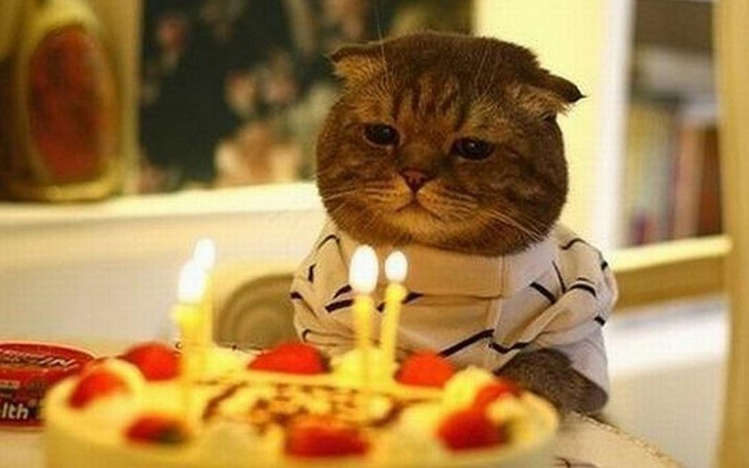 Perch oggi  la Festa del gatto  Wired