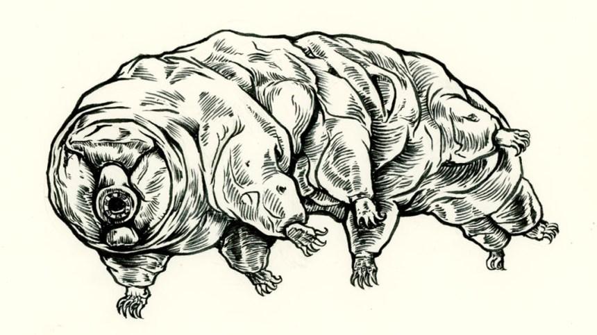 tardigradi_luna