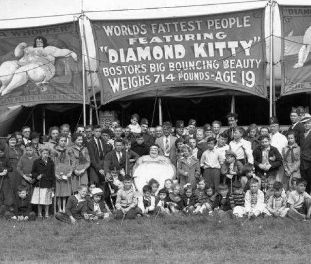 Diamond Kitty Of The Shrine Circus