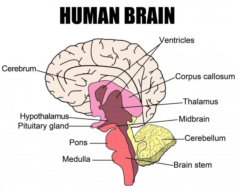 The power of diagrams to shape ideas and reality archipelago abode ex human brain diagram could also be a graphic took that helps identifysort and display possible causes of a problem or quality characteristicsparts ccuart Images