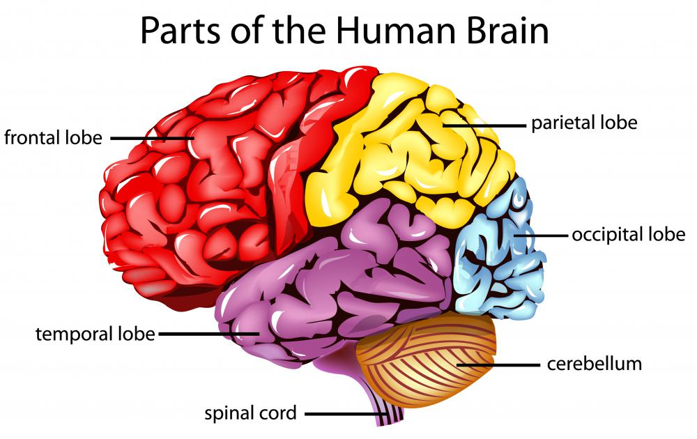 What Is Anomic Aphasia With Pictures