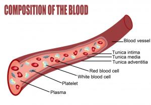 What is the Importance of Blood Type for a Blood Transfusion?