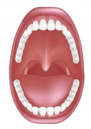 What are the Maxillary Teeth? (with pictures)