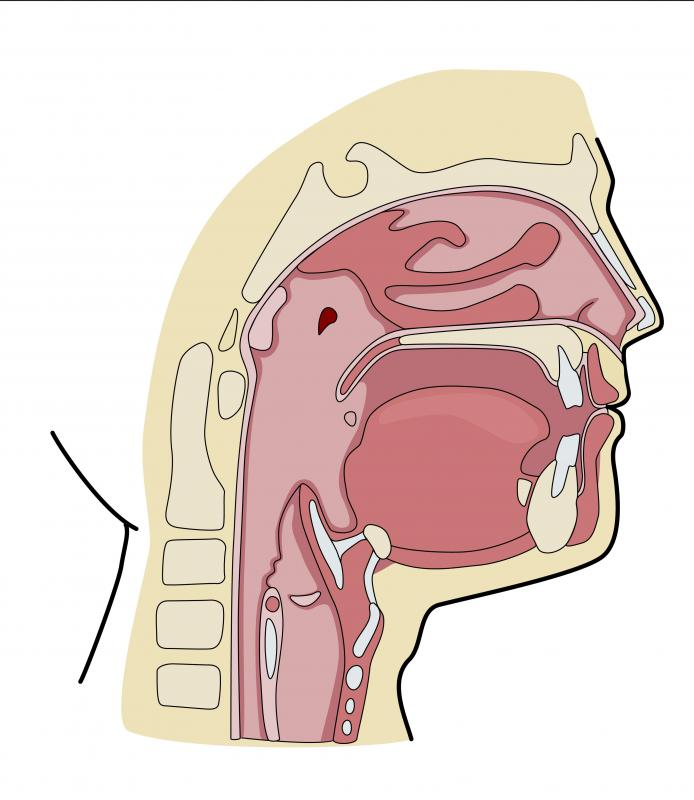 diagram of throat and esophagus 4 ohm dual voice coil subwoofer wiring what is esophageal motility disorder? (with pictures)