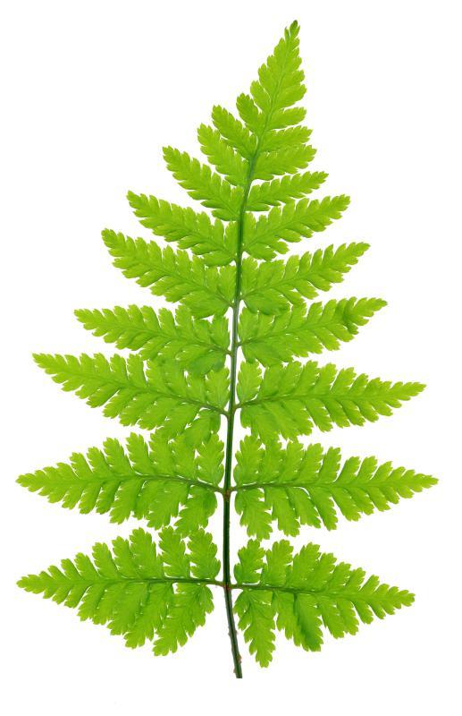Ferns require minimal upkeep.