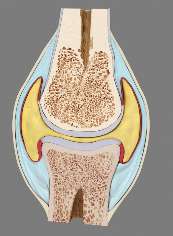 What Is Hyaline Cartilage? (with Pictures