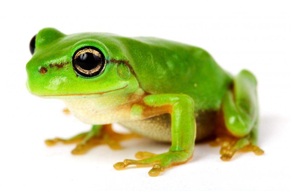 Frog Pictures