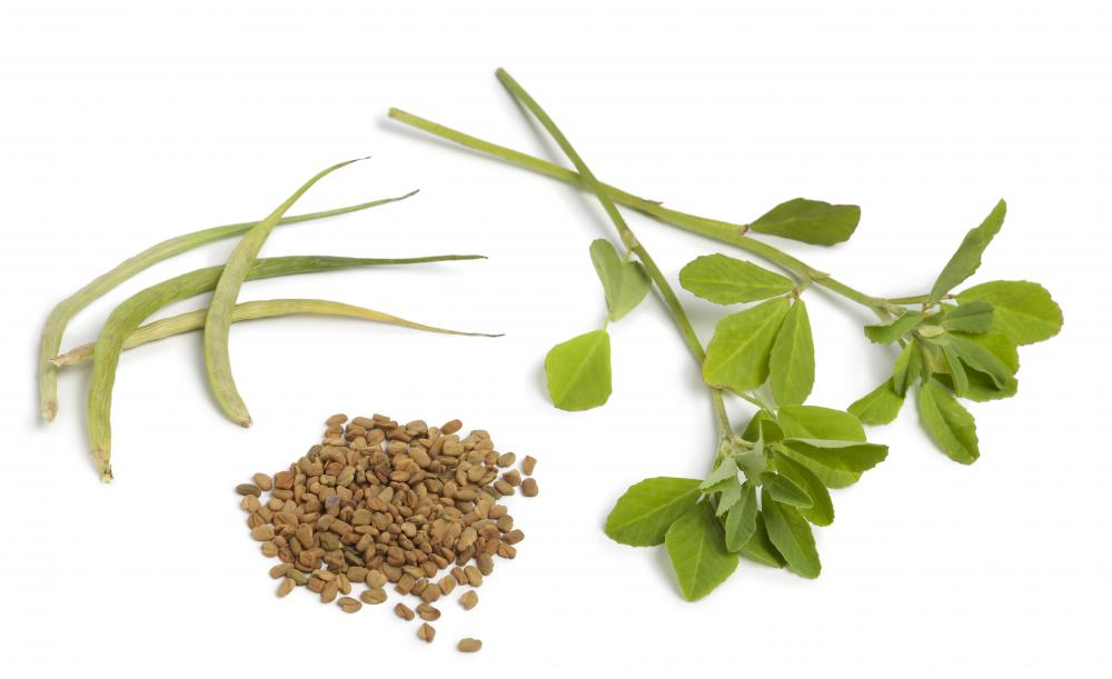 What Are Fenugreek Leaves With Pictures