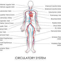 Foot Pulses Diagram 1993 Ford Ranger Ignition Wiring What Is A Posterior Tibial Pulse With Pictures The Of Artery Plays An Important Role In Assessing Circulatory Status Lower Leg