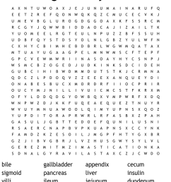 The Digestive System Word Search - WordMint [ 900 x 1121 Pixel ]