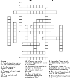 The Digestive System Word Search - WordMint [ 1036 x 1121 Pixel ]