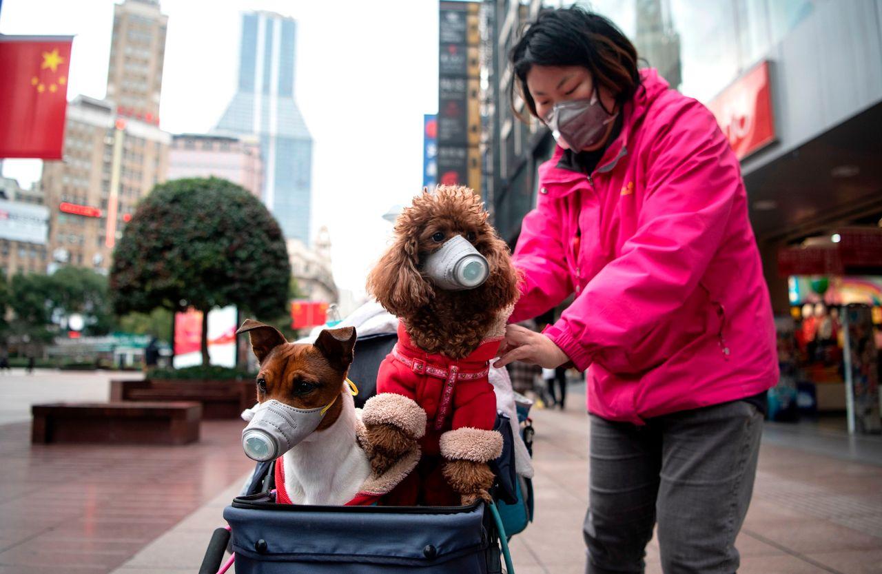 Hong Kong Says Pets of Coronavirus Patients Need to Be Quarantined ...