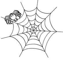 Dibujos INSECTOS para colorear, araña para imprimir