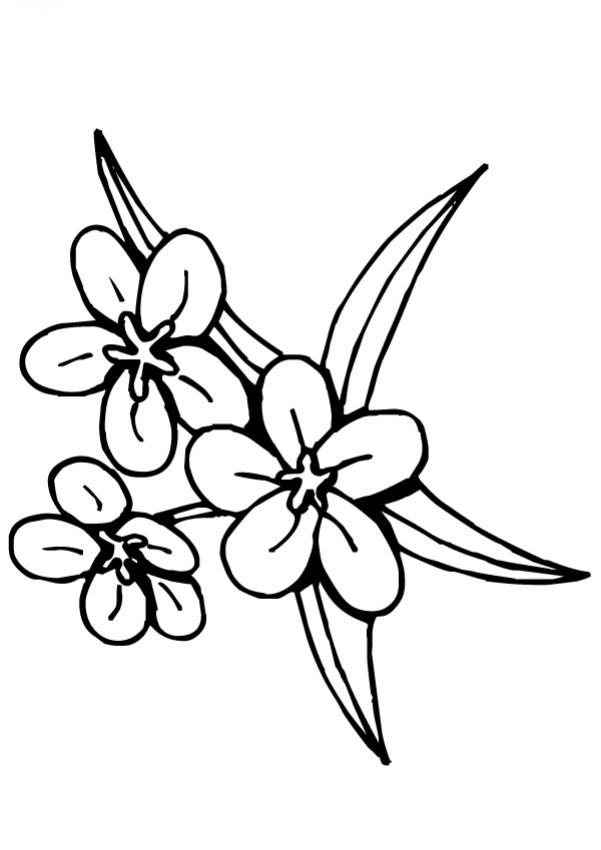 Flores Hawaianas Para Colorear