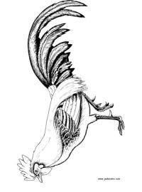 Dibujos de gallos de pelea - Imagui