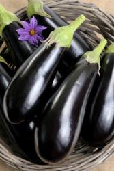 An aubergine or eggplant.