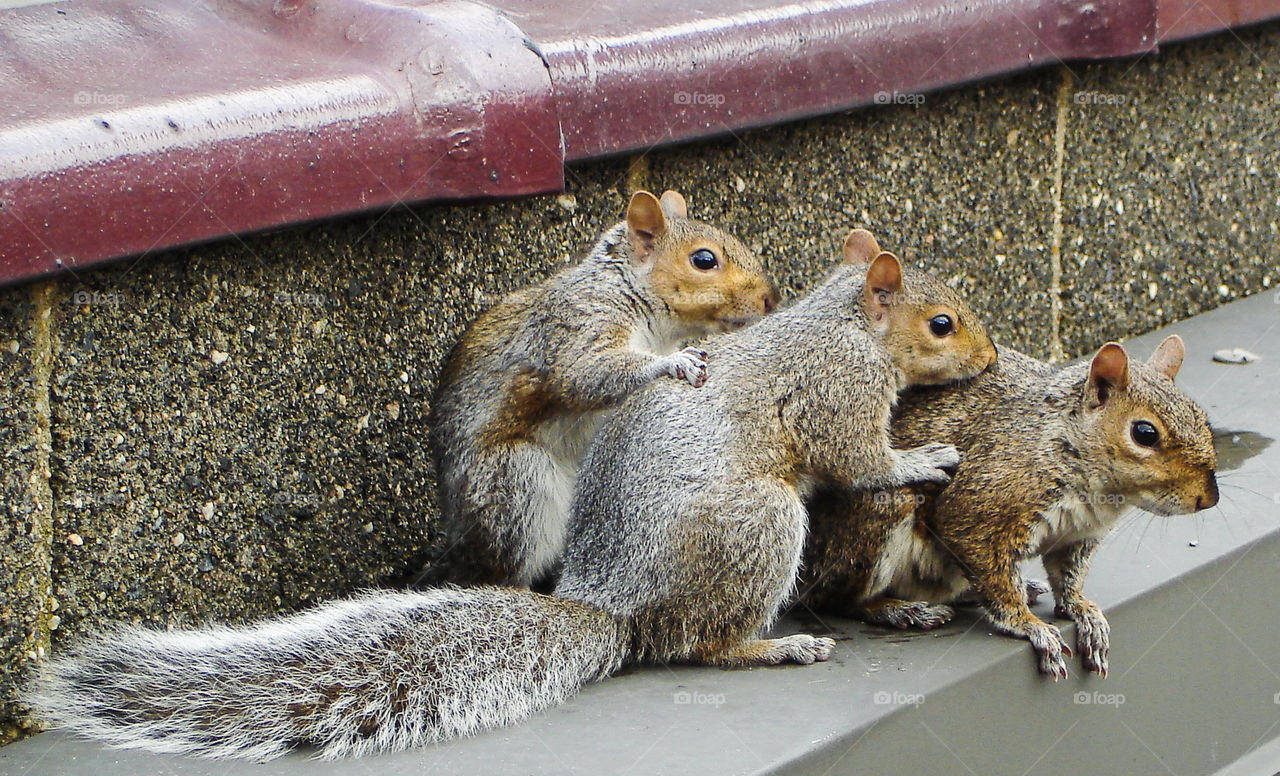 foap com squirrel family