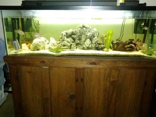 fish tanks for sale 100 gallon - 100 Gallon Aquarium For