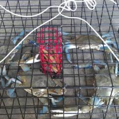 Parts Of The Eye Diagram For Kids Speaker Wiring Ohms New Primo Crab Traps - Sale In Easton, Maryland Classified | Americanlisted.com