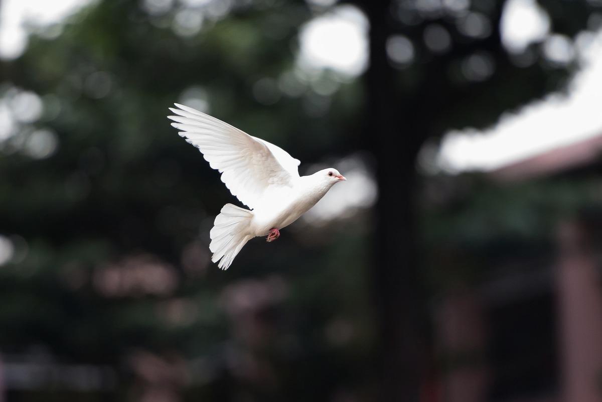 飛到一半不動 哥倫比亞白鴿空中被「定格」 大紀元時報 香港 獨立敢言的良心媒體
