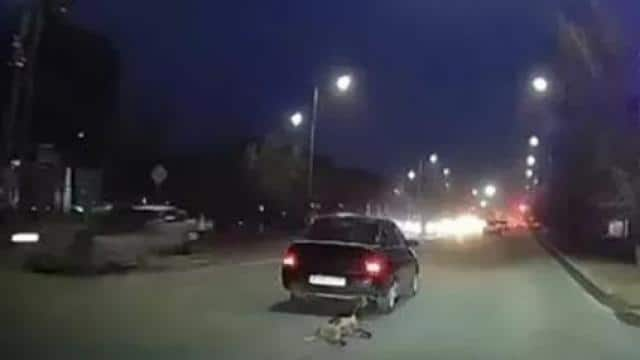 dog dragged on road