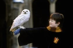 Harry Potter and Hedwig.jpg