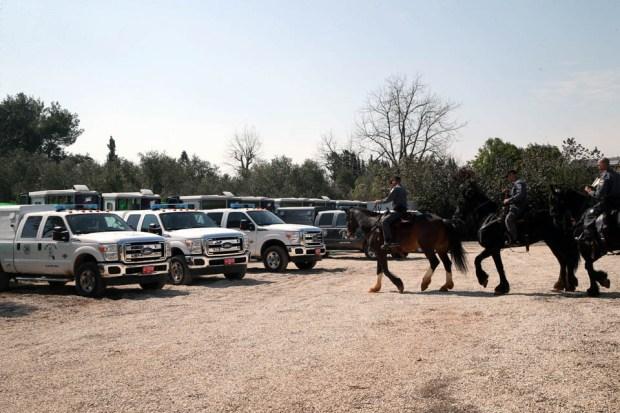 Лошадей на место патрулирования доставляют в специальных машинах. Фото: Ярив Кац