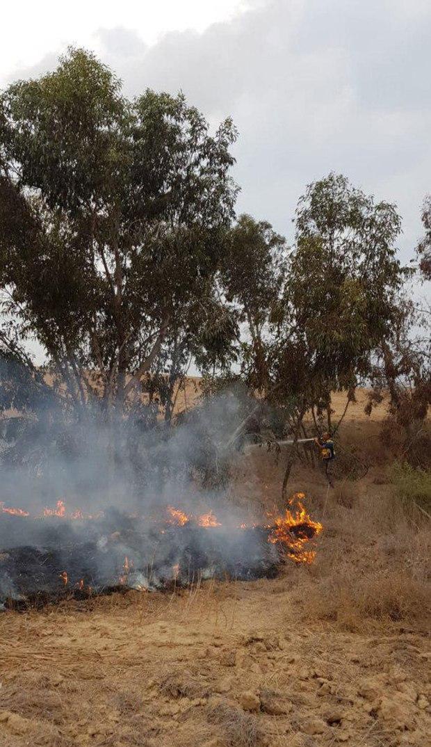 Пожар в лесу Беэри. Фото: Ронен Хельман, ККЛ