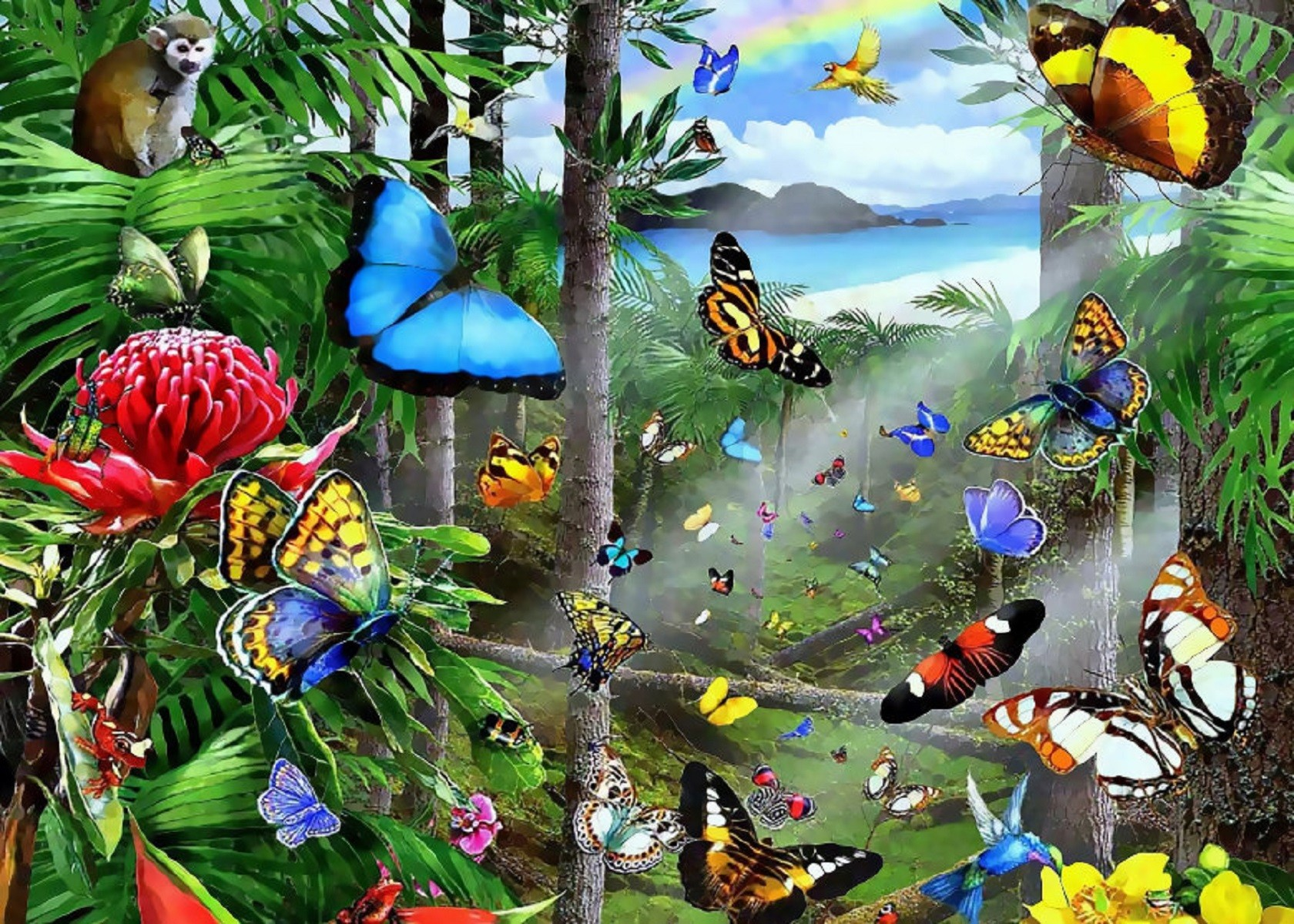 Bird Of Paradise Wallpaper Iphone 5 Butterflies In The Rainforest Wallpaper And Background