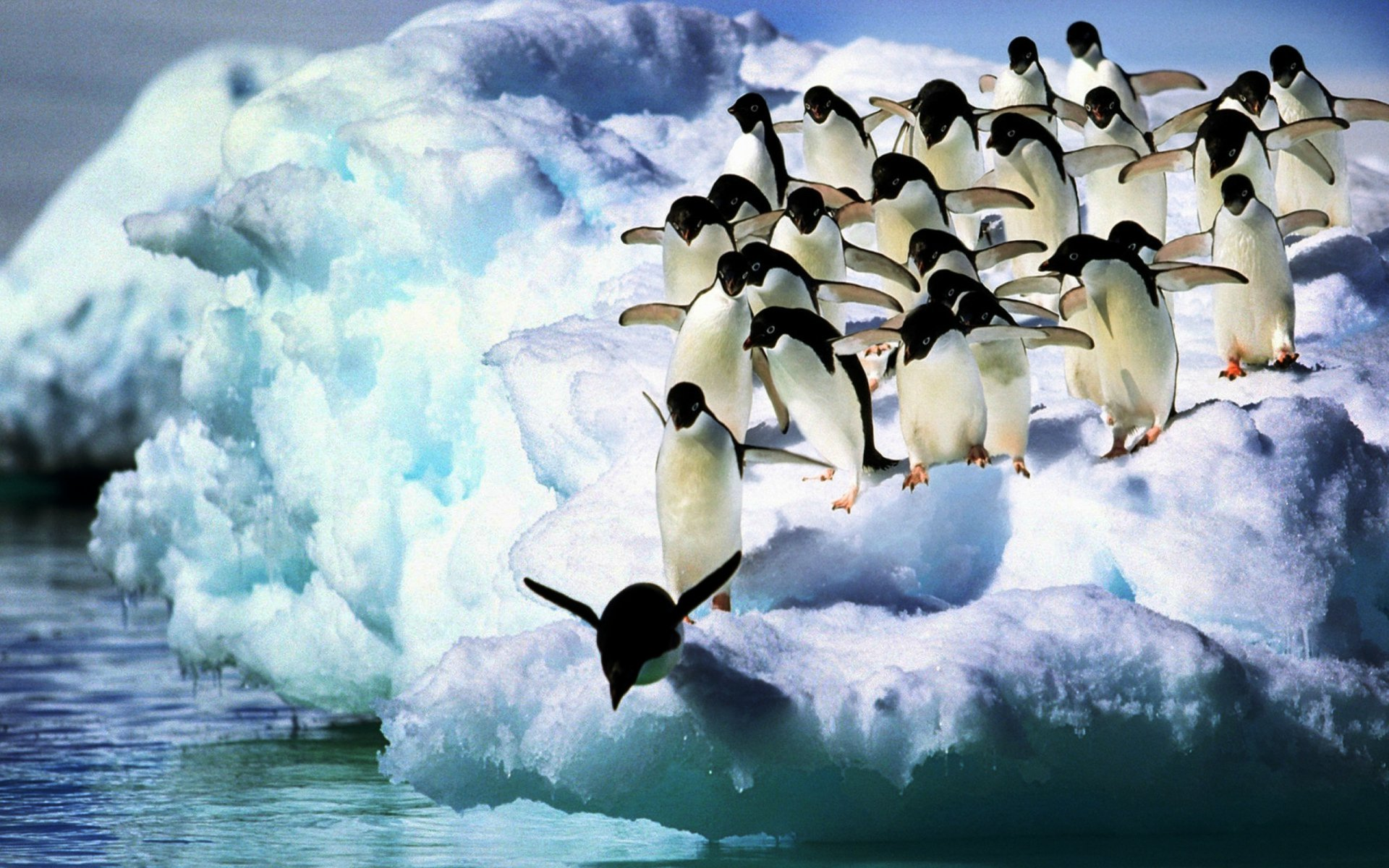 Cute Babies Hd Wallpapers 1366x768 Adelie Penguins Hd Wallpaper Background Image