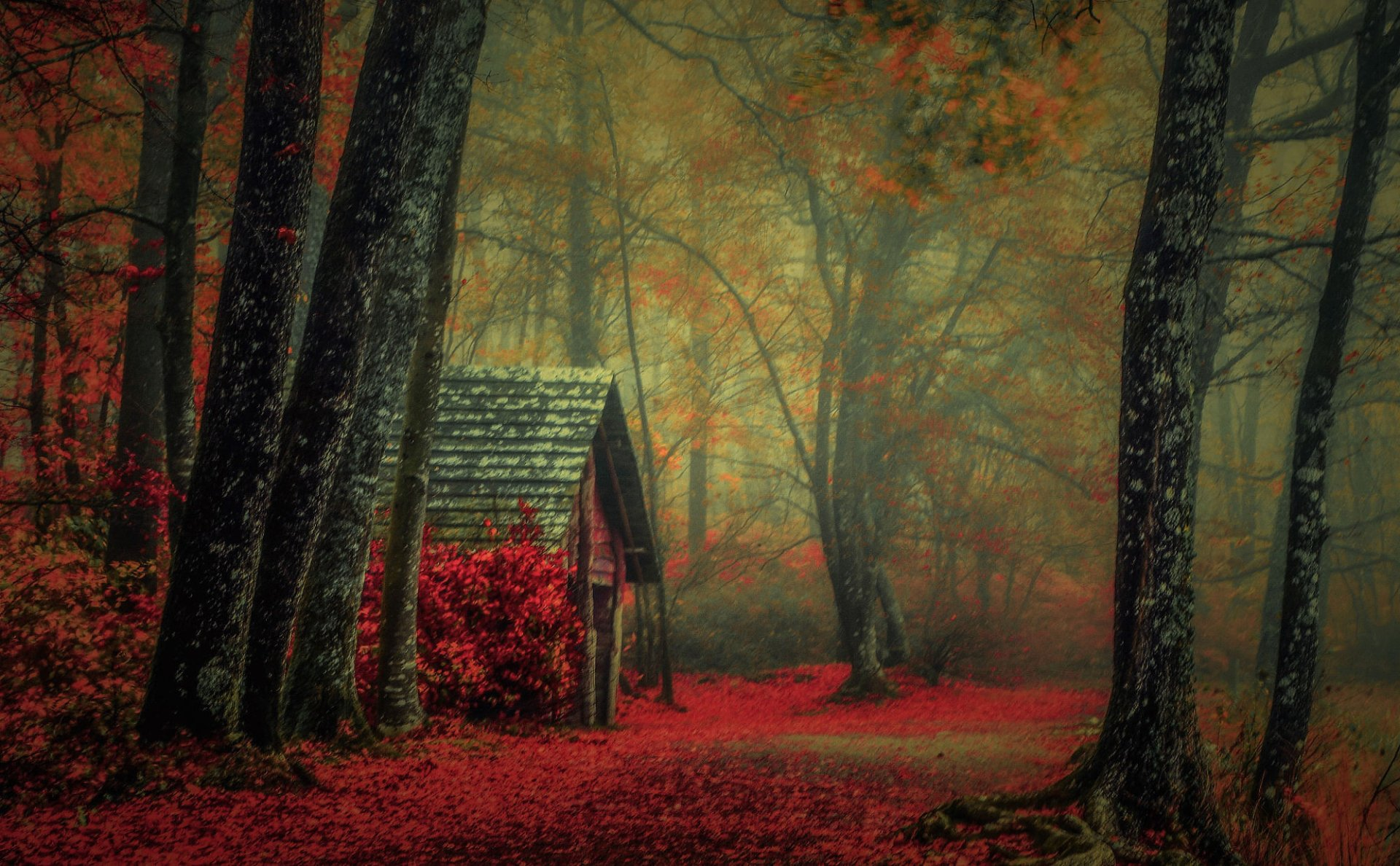 Background Wallpaper Hd Fall Fog Cabin In Autumn Forest Hd Wallpaper Background Image