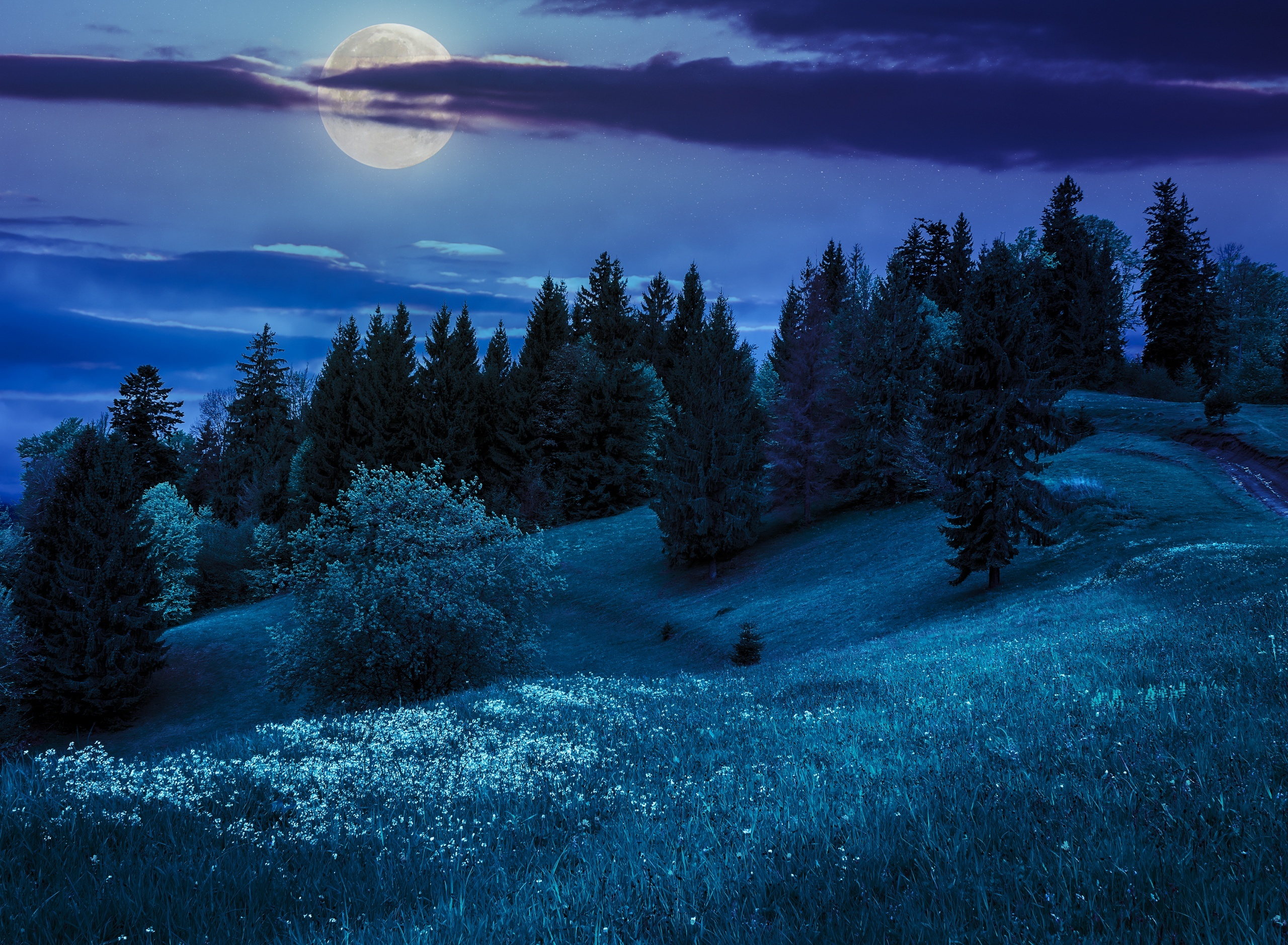 Full Moon on Winter Night HD Wallpaper  Background Image