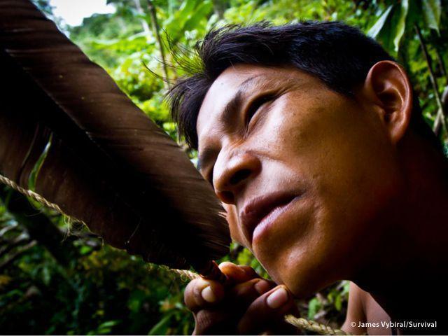 I Matsés di Perù e Brasile sono abili cacciatori, esperti nell?uso di archi e frecce: le aste delle frecce sono di bambù decorato con nastri di cotone e fili d?erba dorata (Joanna Eede ? www.survival.it)
