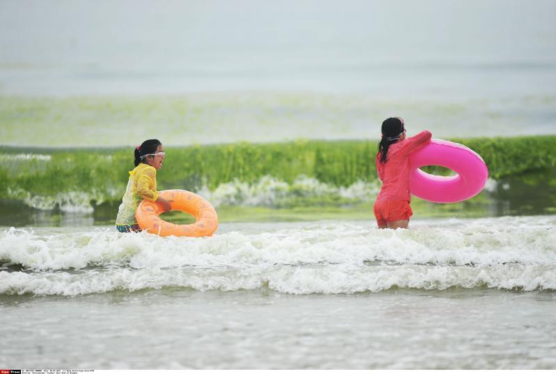 In Cina il Mar Giallo diventa verde di alghe  Corriereit