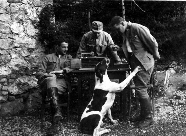Truppe silenziose (e dimenticate): gli animali nella Grande guerra -  Corriere.it