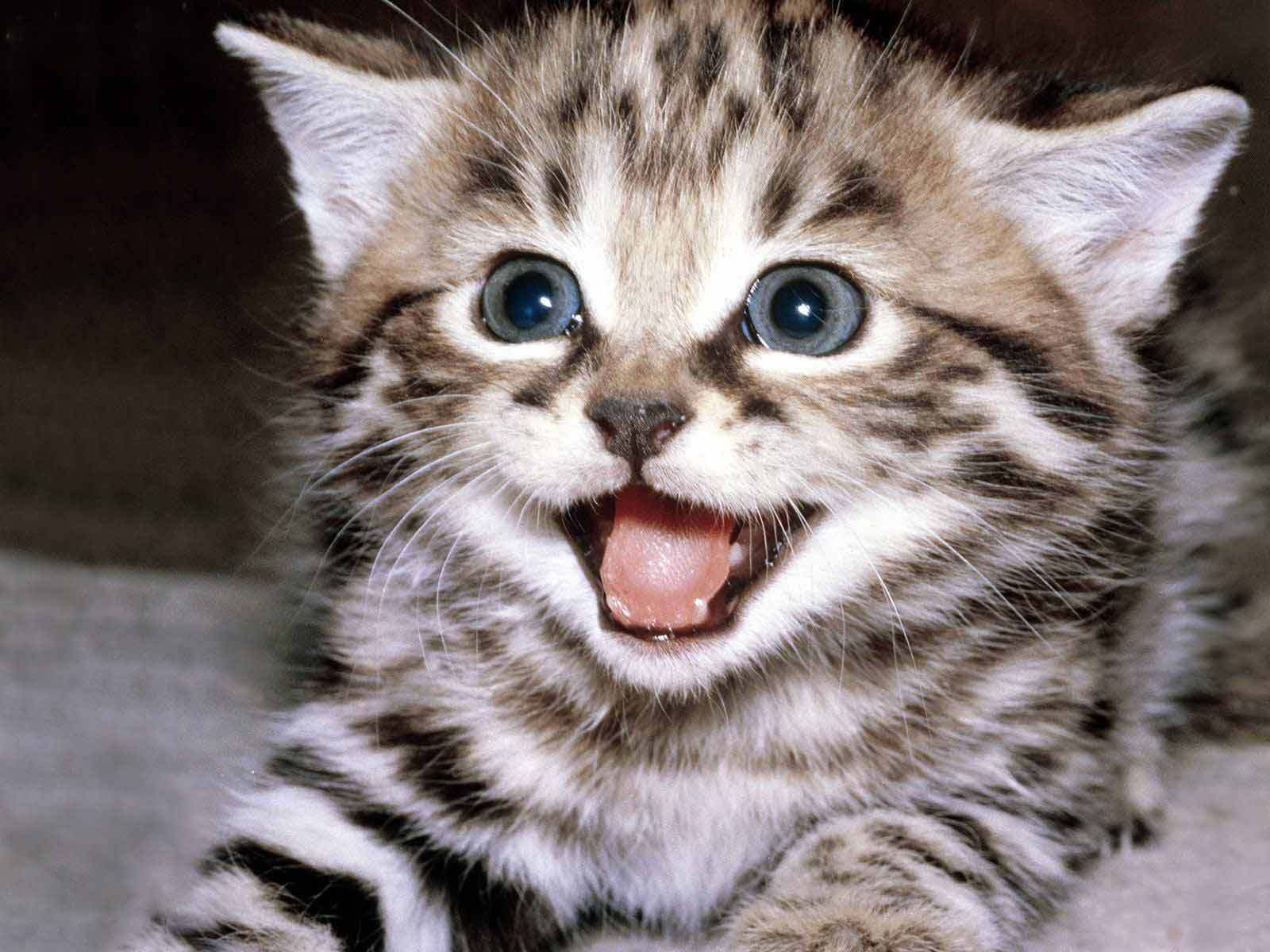 cute kittens lifesfinewhine