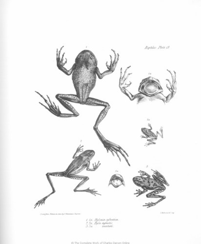 Charles Darwin images The Zoology of the Voyage of H.M.S