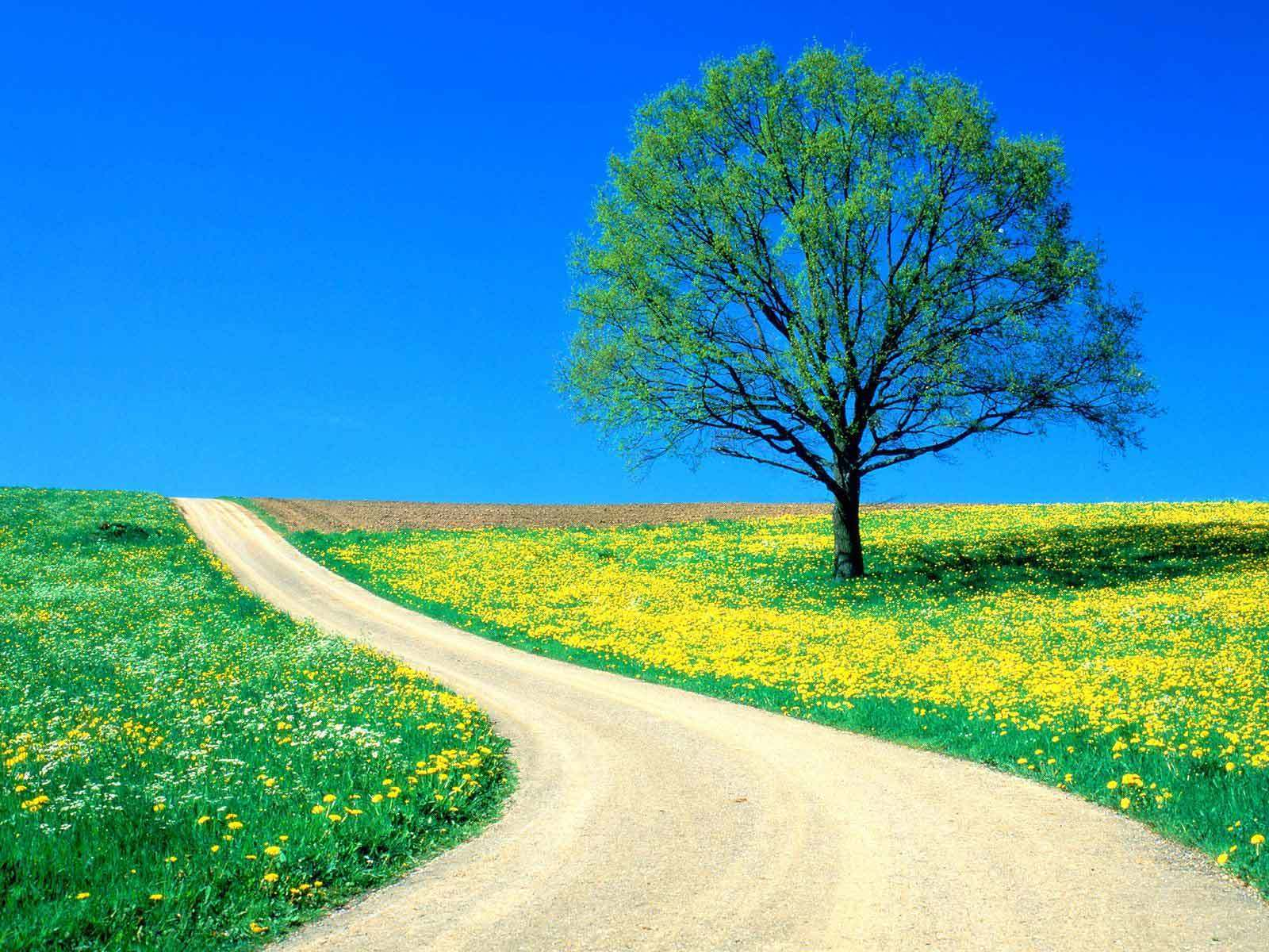 beautiful Spring Day on a country road - spring Photo